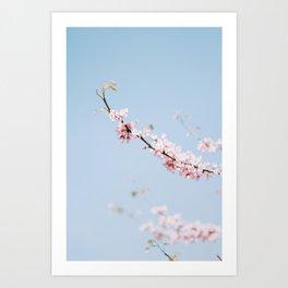 Cotton Candy Flowers Art Print