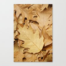 Brown fallen leaves Canvas Print