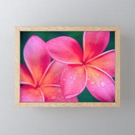 Aloha Hawaii Kalama O Nei Pink Tropical Plumeria Framed Mini Art Print