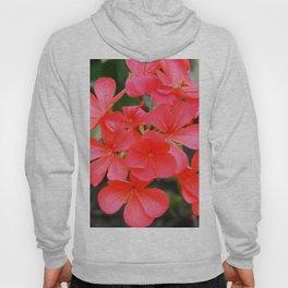Blossom pattern Hoody