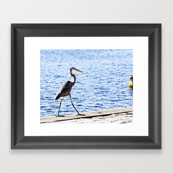 Blue Heron Strut Framed Art Print