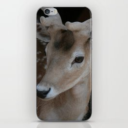 Young deer, portrait iPhone Skin