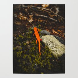 Neon Newt - Neon by Nature - @zekekitchen Poster