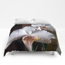 Graceful Orchids !! Comforters