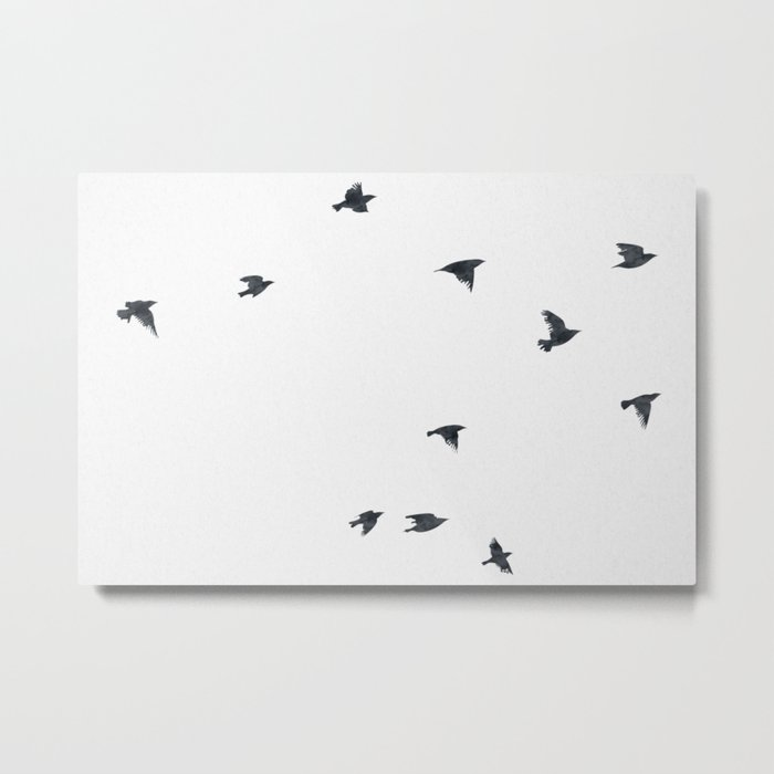 Ravens Birds in Black and White Metal Print