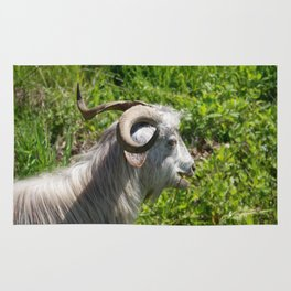 Side View of A Billy Goat Grazing Rug