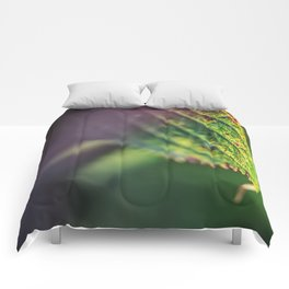 An accent tone Comforters