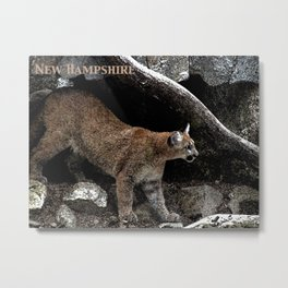 New Hampshire - Are Mountain Lions Here? Metal Print