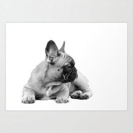 FrenchBulldog Puppy Art Print