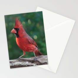 Young Male Cardinal Stationery Cards