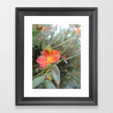 Geranium Framed Art Print