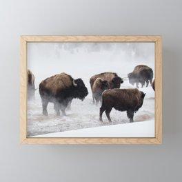 Yellowstone National Park - Bison Herd Framed Mini Art Print
