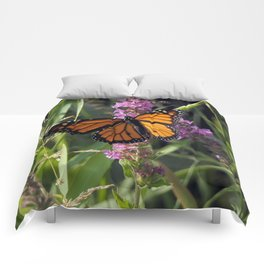 Monarch Splendor Comforters
