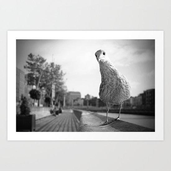 Inquisitive seagull Art Print