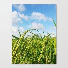 Ripe Rice Canvas Print