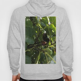 Monarch Butterfly In A Fig Tree Hoody