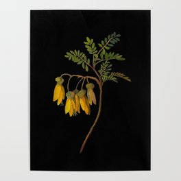 Sophora Tetraptera Mary Delany Floral Paper Collage Delicate Vintage Flowers Poster