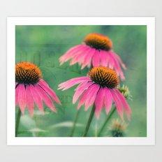 Bright Pink Summer Floral -- Echinacea ConeFlowers Art Print