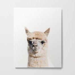 Baby Alpaca, Baby Animals Art Print By Synplus Metal Print