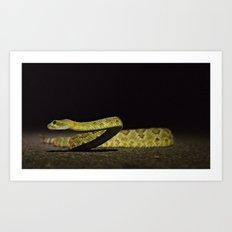 Predator of the Night Art Print