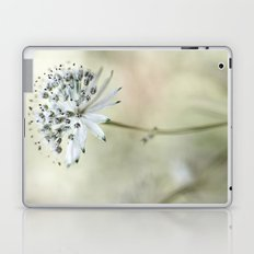 Astrantia Laptop & iPad Skin