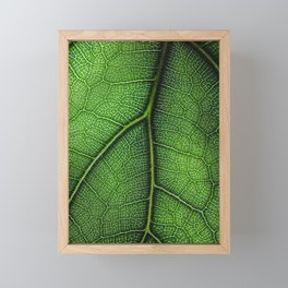 Fiddle Leaf Framed Mini Art Print