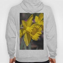 Daffodil 4 Hoody