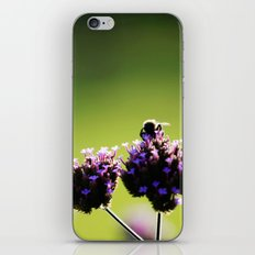 holding on to summer iPhone & iPod Skin