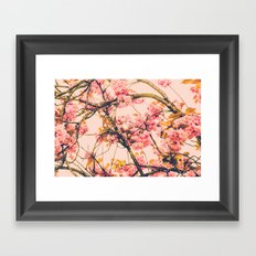 sweet sweet cherry blossoms Framed Art Print