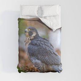 Peregrine Falcon Comforters