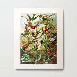 Vintage Hummingbird Illustration Metal Print