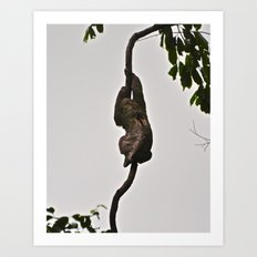 3-toed Sloth Art Print