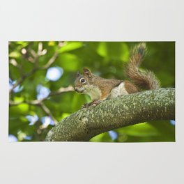 Red Squirrel on a Branch Rug