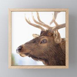 Watercolor Elk Bull 21 Framed Mini Art Print