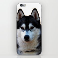 The stare iPhone & iPod Skin