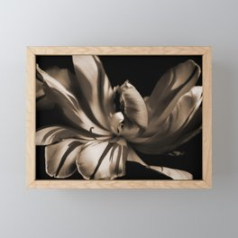 Tulip-sepia Framed Mini Art Print