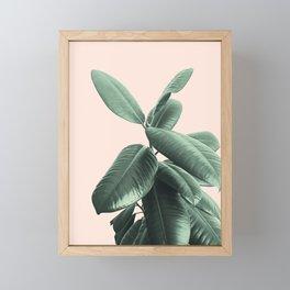 Ficus Elastica #25 #SummerVibes #foliage #decor #art #society6 Framed Mini Art Print