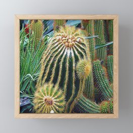 Desert Botanical Garden Framed Mini Art Print