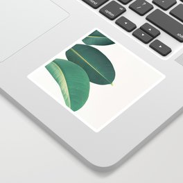 Rubber Fig Leaves II Sticker