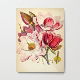 Beautiful Pink Flower Vintage Himalayan Plant Illustration Drawing Metal Print