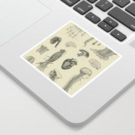 Vintage Anatomy Print Sticker