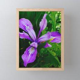 Wild Purple Iris Framed Mini Art Print