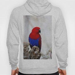 Eclectus Parrot Hoody