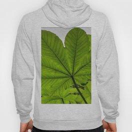 The great Yagrumo tree leaf -  El Yunque rainforest PR Hoody