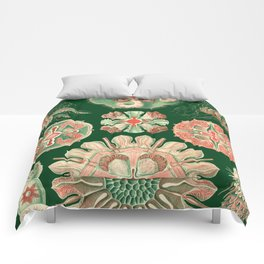 Ernst Haeckel Discomedusae Jellyfish Comforters