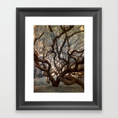 Florida Tree Framed Art Print