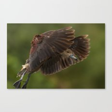 Before touch down Canvas Print