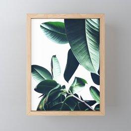Ficus Elastica #26 #foliage #decor #art #society6 Framed Mini Art Print