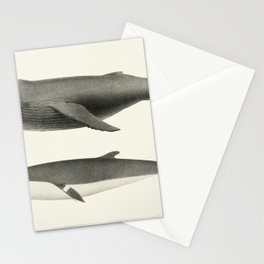 1 Humpback whale (Megaptera versabilis) 2 Minke whale (Balaenoptera davidsoni) from Natural history Stationery Cards