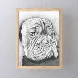 Dogue De Bordeaux Framed Mini Art Print